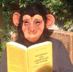 chimp*